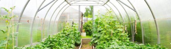 construct greenhouse 1000x288