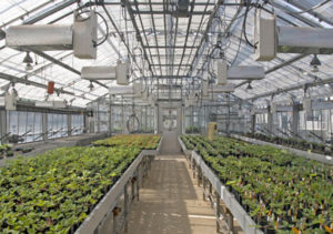 Greenhouse Construction Company - AFS General Contracting